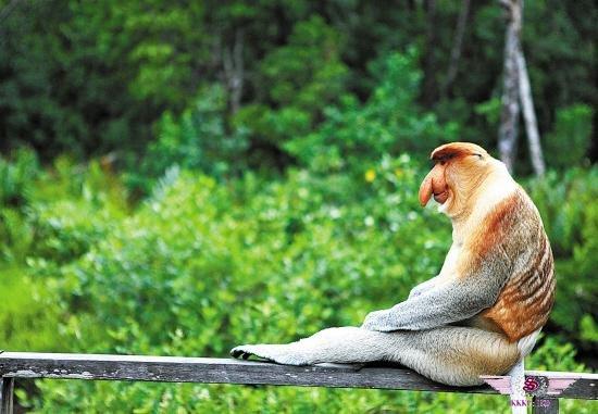 马来西亚沙巴岛热带雨林山打根