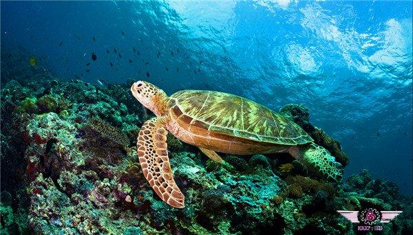 西巴丹岛潜水旅游攻略